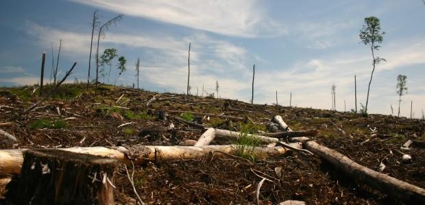 Grassy Narrows First Nation on alert for logging.